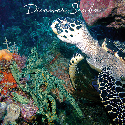 Scuba-Discover Life at St.Lucia Resorts