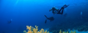 Diving in St Lucia, Caribbean