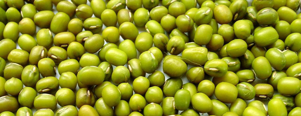 Mung Beans for Healthy Diet at St.Lucia Resorts Holidaying
